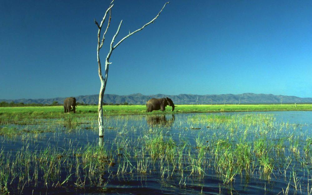 Elephants at Matusadona National Park CREDIT: DENNIS COX / ALAMY